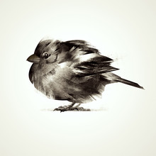 Painted Isolated Bird Sitting ...
