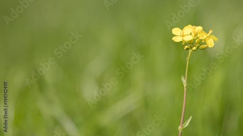 Fototapeten Natur Een gelukkig lentegevoel