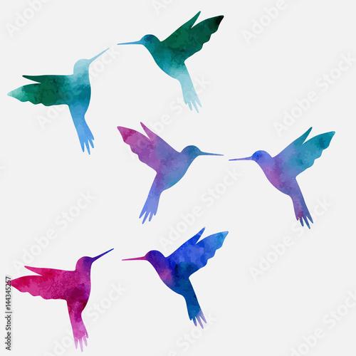 Hummingbird watercolor Fototapeta