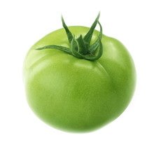 Green Tomato Isolated