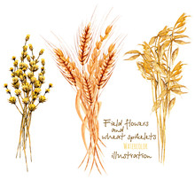 Illustration With Sheaf Of Whe...
