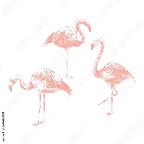 Canvas Prints Flamingo Bird Hand drawn flamingoes