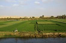Landwirtschaft Im Niltal Bei B...