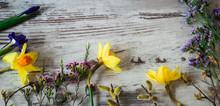 Beautifu Yellow Daffodils, Lil...