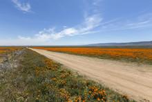 Dirt Road Through Poppy Wildflower Fields Near Lancaster, California.
