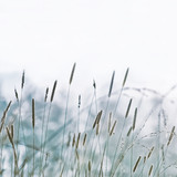 Pastel Blurred Herb Nature Background - 144384494