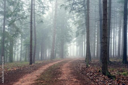 Cadres-photo bureau Foret brouillard Path in misty autumn forest.