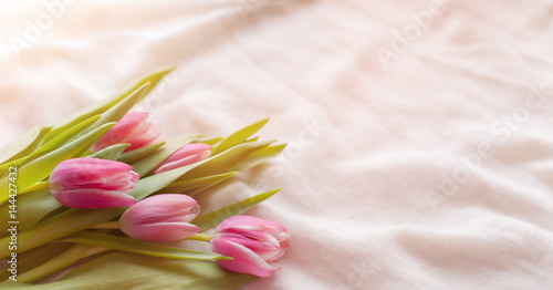 Fototapeta Pink tulips on white fabric, lit by the rays of the setting sun