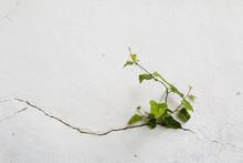 Tree Growing Through Cracked W...