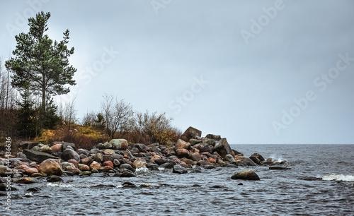 Fényképezés  Pines on the stony shore of stormy waving Ladoga lake