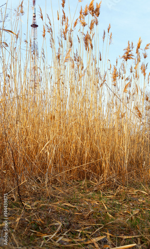 Photo High dry grass