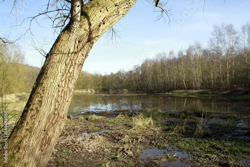 Biotope, Nature conservation, Blumenthal, Lower Saxony, Germany, Europe Wallpaper Mural
