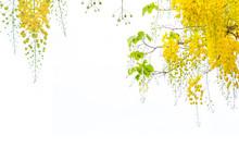 Golden Shower Flowers , Cassia Fistulosa Tree Flowers , Summer Flowers In Songkran, Festival In Thailand