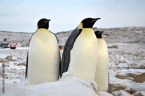 Poster Pinguin Emperor Penguin in Antarctica on a background of snow. Close-up.