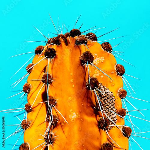 Fototapeta Cactus Honey Minimal fashion art gallery