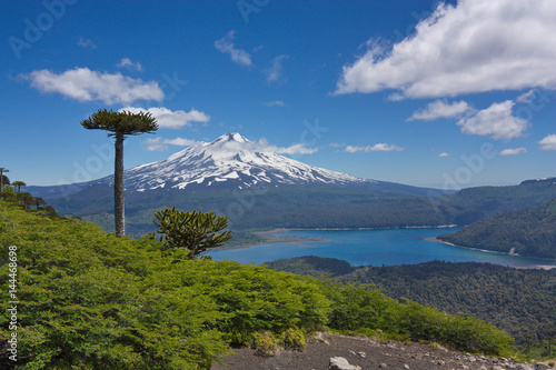 Photo araucarias against the background of Llaima volcano  in Conguillio National Park