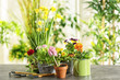 Composition with beautiful plants and gardening tools on table