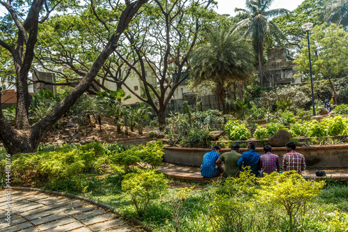 Narrow view of green garden with grass, trees, plants, shadows and