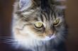 Cat's head close-up