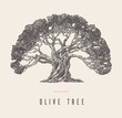 Drawn vector illustration olive tree label oil