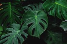 Low Key, Green Leaves Of Monst...