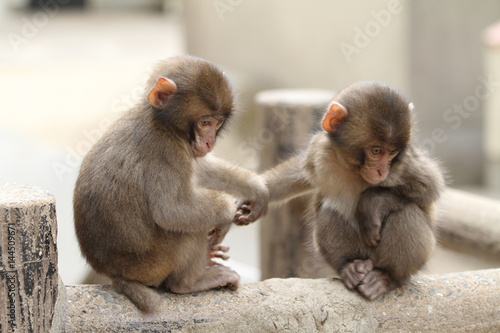 Foto op Aluminium Aap wild Japanese baby monkey in Beppu, Oita, Japan