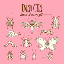 Insects Vintage Set Of Hand Drawn Doodle Sketch