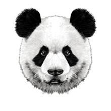 Panda Head Is Symmetrical Look...