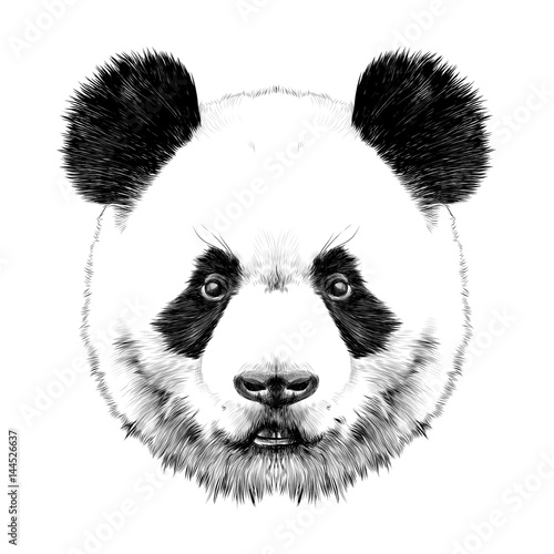 Panda head is symmetrical looks right, sketch vector graphics black and white drawing