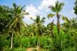 Deep tropical forest of Sri Lanka
