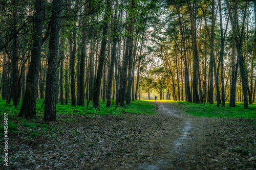Fototapeten Wald Nature of Ukraine - spring forest