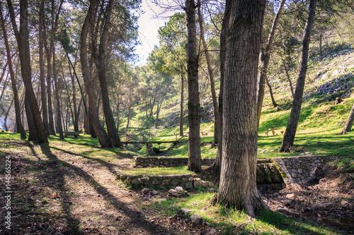 Fotografie, Obraz  Maravilloso paisaje en la Cañada de las Hazadillas en Jaén