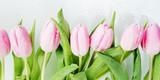 Fototapeta Tulipany - Pink tulips flowers