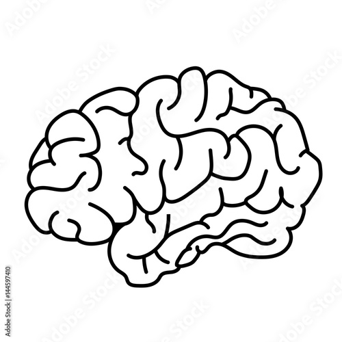 flat style human brain side view doodle illustration