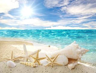 FototapetaKaribik: Muscheln und Seesterne vor Meer, Strand und blauem Himmel :)