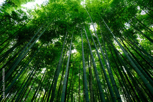 Foto op Plexiglas Bamboe Bamboo Forest is a tourist site in Arashiyama, Kyoto, Japan. The Ministry of the Environment included the Sagano Bamboo Forest on its list of 100 Soundscapes of Japan.
