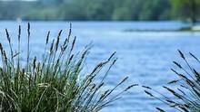 îlot D'herbesAvec Lac En Fond