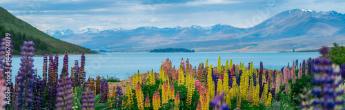 Wall Murals Blue Landscape at Lake Tekapo Lupin Field in New Zealand