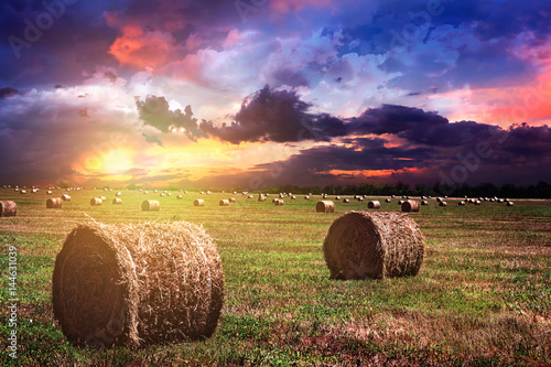 Photo harvested bales of straw from the field
