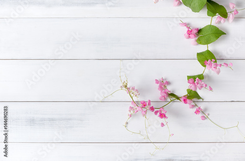 Tela Mexican Creeper pink flower on white wood background