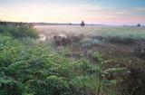 mglisty wschód słońca na bagnach - 144692481