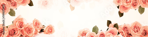 Fototapeta panorama mit rosen obraz