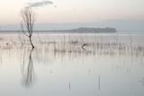 Drzewo odbijające się na idealnie spokojnej wodzie - 144703270