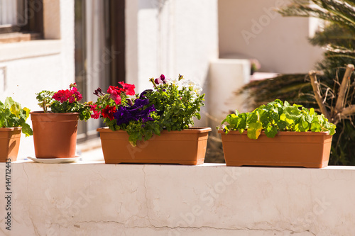 Photo Stands Stairs Different potted plants and seedlings outdoor