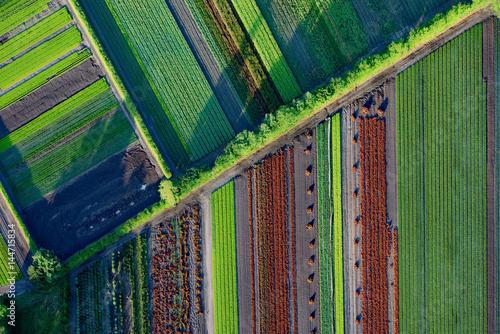 Luftaufnahme diverser Felder einer Gärtnerei mit langen Schatten