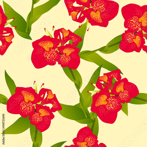 red-canna-indica-canna-lily-indian-shot-on-beige