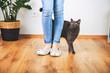 canvas print picture - Süßes Kätzchen mit Frauchen