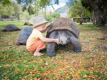 Aldabra Giant Tortoise And Child