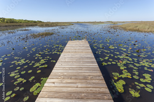 Poster de jardin Parc Naturel Swamp in the Everglades National Park, Florida
