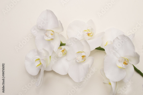 Poster Orchid romantic branch of white orchid